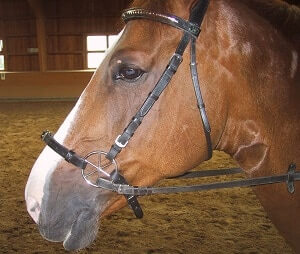 difference between bridle and headstall