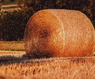 basic hay and grain