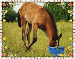horses 6 nutritional daily requirements