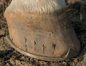horse hoof care information