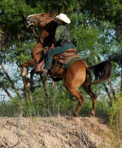 Learn Horse's Bad Behavior And Vices